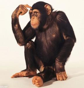 chimpthink2