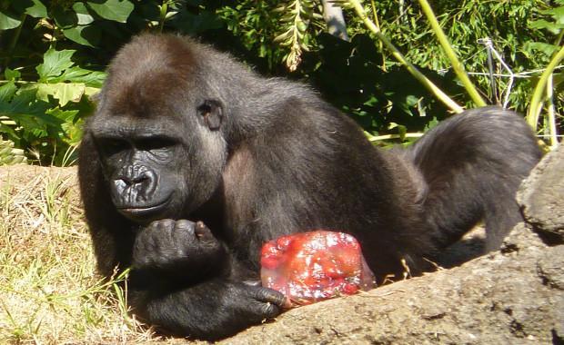sursa: http://www.zoo.org.au