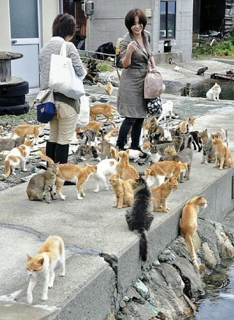 cat-island-aoshima-ehime-japan-source-yomiuri-news