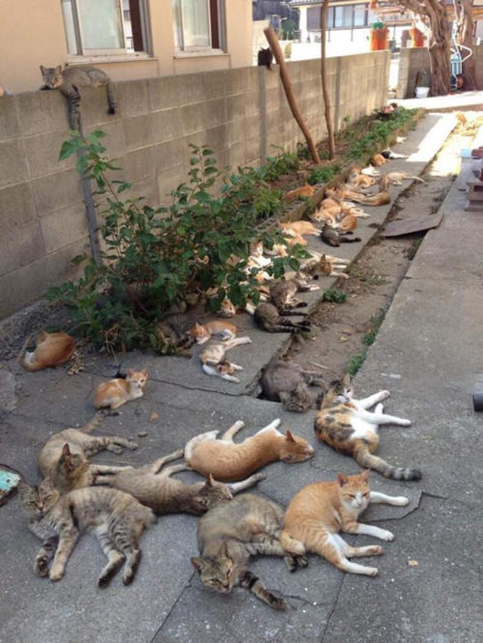 nagahamacho-aoshima-japan-the-island-looks-like-cats-haven