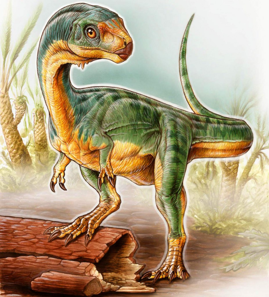 Chilesaurus diegosuarezi2