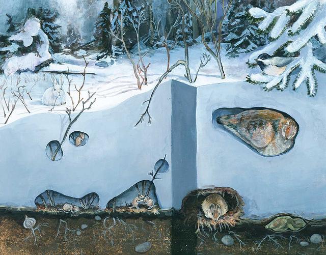 winter_z