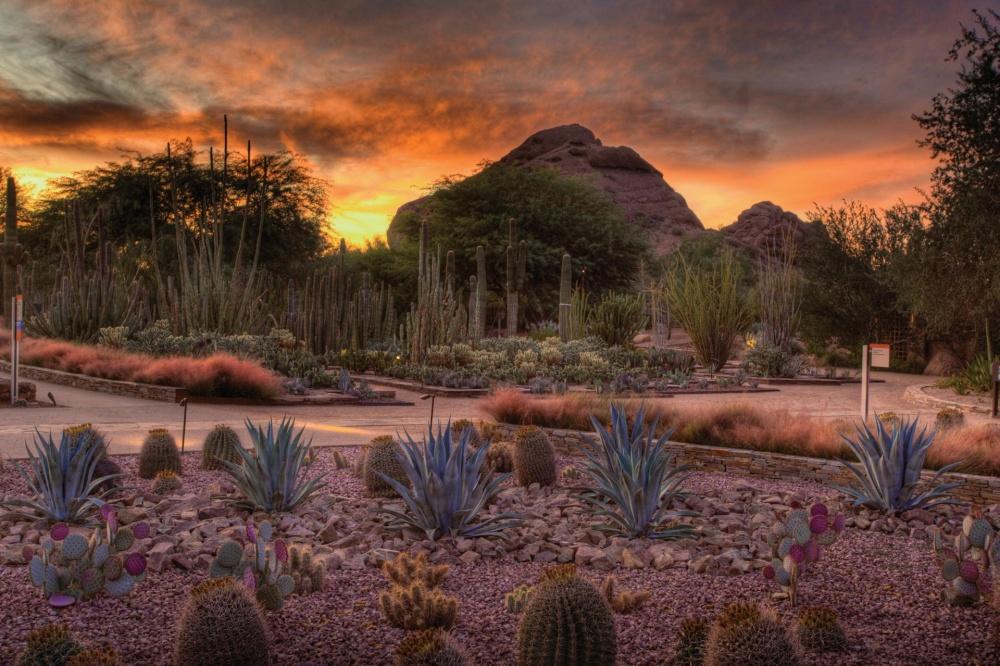 6493710-1000-1455180975-Desert_Botanical_Garden_Sunset_SnVyqetc-wbGl_j5H8Qgjfn_cmyk_l
