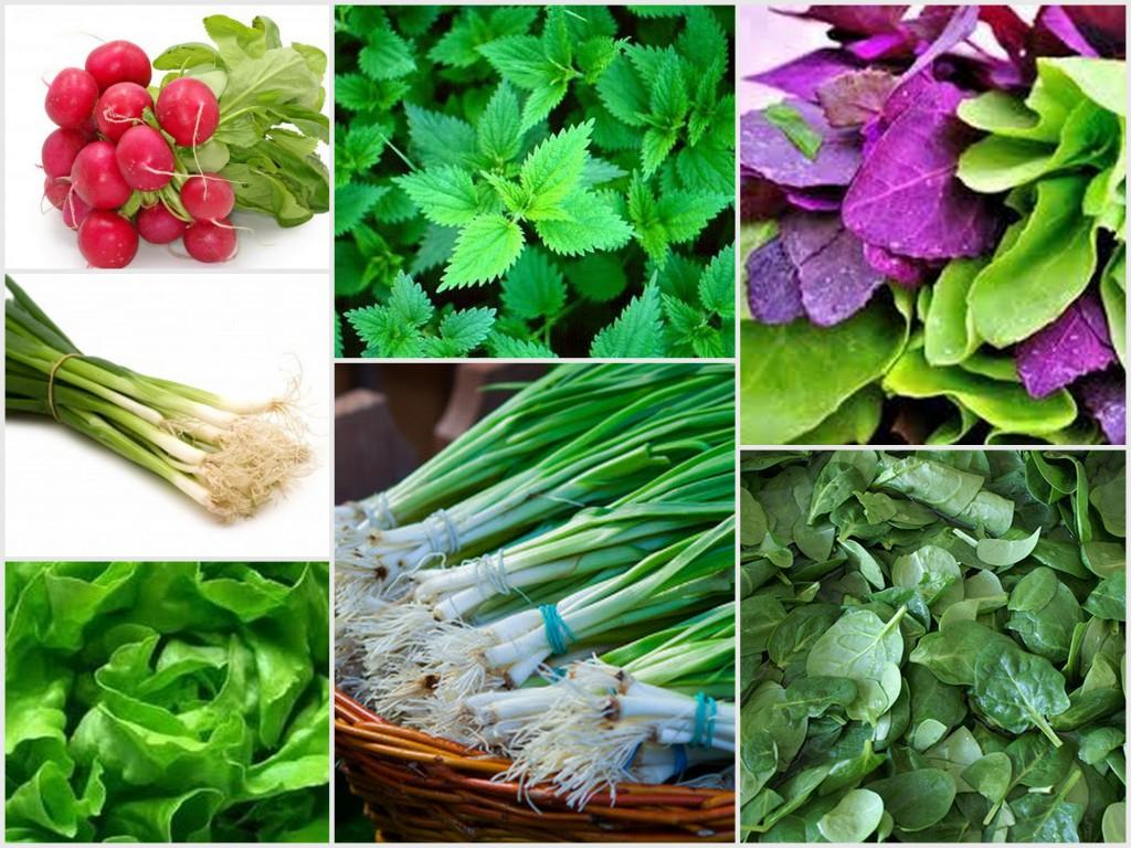 legume de primavara