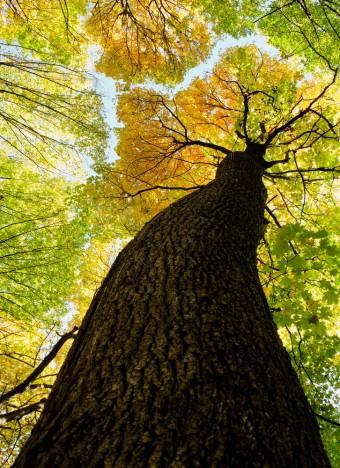 tree-340x468