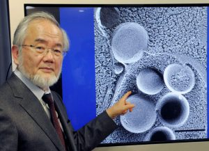 yoshinoriohsumi-jpg-size-custom-crop-1086x784