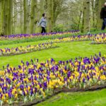 People look at blooming flowers during the official opening of the 65th edition of the international Keukenhof flower show in Lisse, the Netherlands, on March 18, 2014. Because of the early spring, the Keukenhof is already in full bloom now. AFP PHOTO / ANP / ROBIN VAN LONKHUIJSEN  ***Netherlands out*** / AFP PHOTO / ANP / ROBIN VAN LONKHUIJSEN