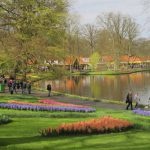 A picture taken on April 12, 2016 shows a general view of the world's largest bulb garden of Keukenhof in Lisse. Millions of bulbs have blossomed in a riot of colour from Delft blues to reds and porcelain whites, drawing huge crowds to an annual Dutch springtime rite at the renowned Keukenhof gardens. The world's largest bulb garden, which boasts some seven million flowers, has  depicted in flowers this year's theme of the Netherlands Golden Age.  / AFP PHOTO / Sophie MIGNON