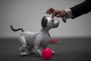 The newest generation of the Aibo robot, which uses artificial intelligences, is demonstrated on the eve of CES in Las Vegas, Nevada, January 8, 2018.   / AFP PHOTO / DAVID MCNEW