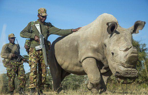 rinocer3-465x390